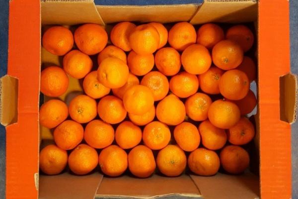 fruit_(5).jpg