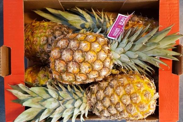 fruit_(1).jpg