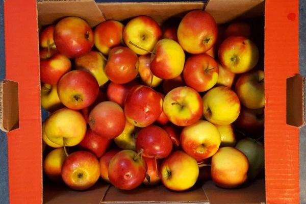 fruit_(3).jpg