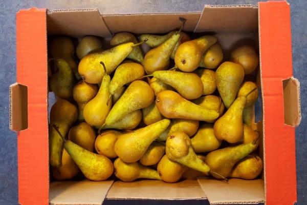 fruit_(4).jpg