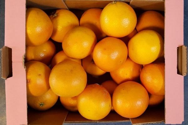 fruit_(2).jpg